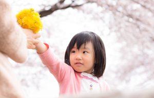 たんぽぽ花束と女児